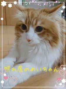 清水香帆 猫